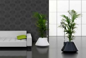 Plantas con suero