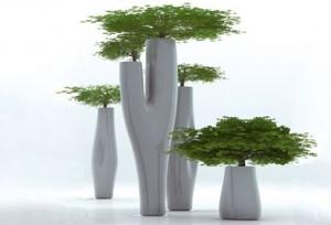 Missed Tree Serralunga1