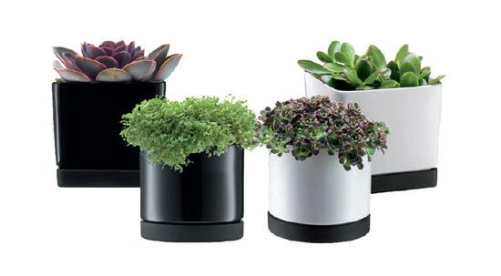 Maceteros para oficinas macetas jardineras y maceteros - Macetas para pared ...