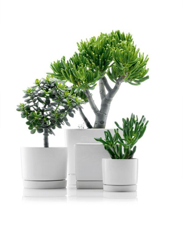 Maceteros para oficinas macetas jardineras y maceteros - Macetas minimalistas ...