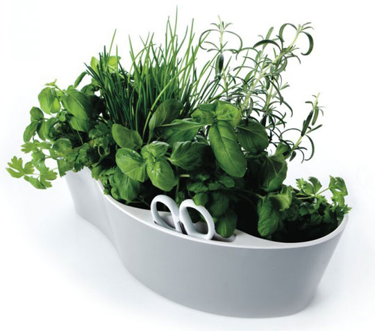Herb-garden-Royal-VKB