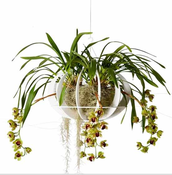 Pollen_Elevate-your-garden