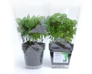 Maceteros para interior macetas jardineras y maceteros - Plantas aromaticas interior ...