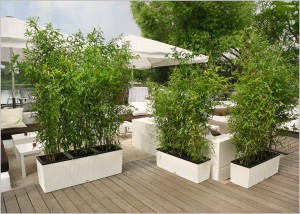 jardinera trio